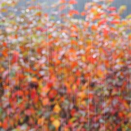 Raindrops. by Ólafur Ingi Ólafsson - Abstract Patterns ( collorfull, leaf, reykjavík, iceland, tree, leafs, autumn, trees, weather, raindrop, raindrops, leafcollor, rain )