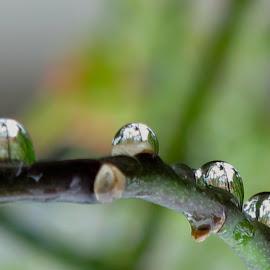 by Bozidarka Scerbe Haupt - Nature Up Close Natural Waterdrops