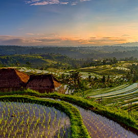 .:: happy dawn ::. by Setyawan B. Prasodjo - Landscapes Prairies, Meadows & Fields