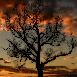 A Tree Stands Tall by Linda Karlin - Landscapes Sunsets & Sunrises ( nature, sunset, landscape,  )