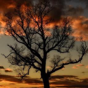 A Tree Stands Tall by Linda Karlin - Landscapes Sunsets & Sunrises ( nature, sunset, landscape,  )
