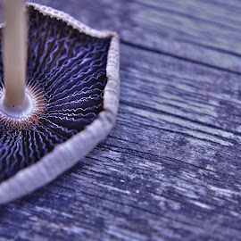 Underneath a mushroom by Ruth Holt - Novices Only Macro ( zig zag, mushroom, fungi, pattern, underneath )