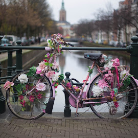 Old Dutch Girl by Jim Sangwine - Transportation Bicycles (  )