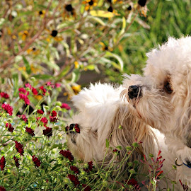 Always stop to smell the flowers by Joy Woolf  Woodhall - Animals - Dogs Playing (  )