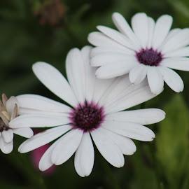 by Mira Babić - Novices Only Flowers & Plants