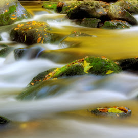Golden Reflections of Fall by Greg Mimbs - Nature Up Close Water ( water, moss, reflections, nantahala, greg mimbs, wnc, moss covered rocks, western north carolina, river rocks, fall, colorful leaves, rapids, stones, rocks, whitewater, golden, river )