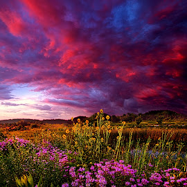 Life Love and Hope by Phil Koch - Landscapes Prairies, Meadows & Fields ( vertical, photograph, yellow, leaves, photooftheday, wicounties, love, sky, tree, nature, autumn, bestoftheday, flower, instagood, follow, orange, twilight, agriculture, horizon, portrait, environment, dawn, serene, trees, floral, natural light, wisconsin, ray, landscape, phil koch, spring, sun, photography, farm, horizons, clouds, office, park, green, scenic, morning, shadows, wild flowers, field, picoftheday, red, fog, blue, sunset, peace, fall, meadow, summer, landscapephotography, beam, earth, sunrise, landscapes, mist )