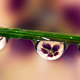 by Carlos De Sousa Ramos - Nature Up Close Natural Waterdrops