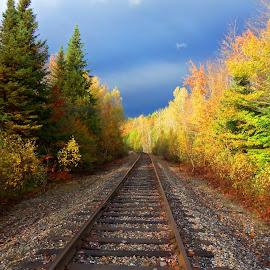 Storm Brewing by Sandy Davis DePina - Transportation Railway Tracks ( train tracks, blue, green, trees, train, storm, path, nature, landscape )