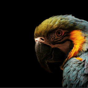 Are you looking at me? by Kelly Williams - Animals Birds ( flight, exotic bird, zoo, wings, parrot, wildlife, feathers, animal,  )