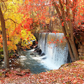 fall colors by Jessie Dautrich - Landscapes Forests ( red, fall, waterfall, yellow, leaves, color, colorful, nature )