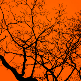 Magic Tree by Habeeb Rahman - Nature Up Close Trees & Bushes ( abstract, orange, magic tree, wallpaper, art, tree art, kerala, orange background, nature art, tree, nature, india, black, tree in orange background )