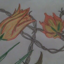 Tulips and barbed wire by Jessica Anderson - Drawing All Drawing