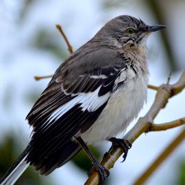 Bird in the Rain by Rob Kovacs - Novices Only Wildlife