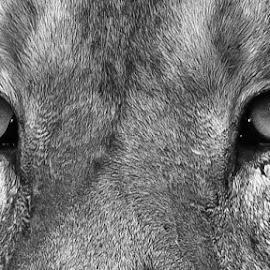 Sharp by Dhinesh Rajarathinam - Animals Lions, Tigers & Big Cats