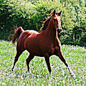 Horse Sound Effects icon