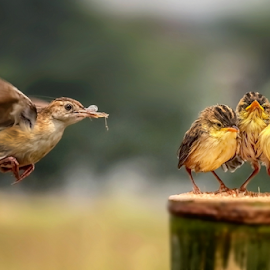In Flight to Target by MazLoy Husada - Animals Birds (  )