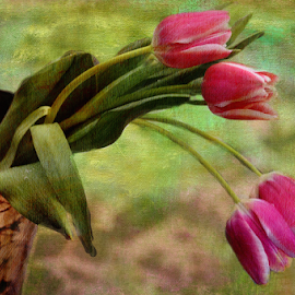 Spring is almost here... :))))) by Yasmin Simpson - Digital Art Things ( fineart, rosa, primavera, pink, texturas, tulipanes, tulips, spring )