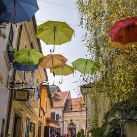 Szentendre by Tracey Dolan - City,  Street & Park  Street Scenes