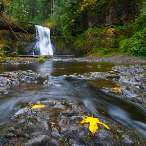 Lone Leaf by Jim Harmer - Landscapes Waterscapes ( oregon, silver falls, portland, landscape )