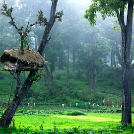 Tree House by Shameer Kamarudheen - Landscapes Forests ( tree house )