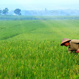 farmer by Muhamad Aridli - People Street & Candids
