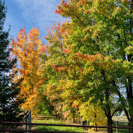 fall is in the air by Tammy Arruda - Landscapes Prairies, Meadows & Fields ( fall, trees )