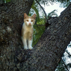 Tree Climber by Angela  H - Animals - Cats Portraits ( cats, hdr, nature, pets, trees )