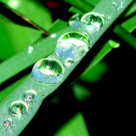 After the rain by Yusop Sulaiman - Nature Up Close Natural Waterdrops