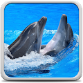 Dolphins Live Wallpaper APK for Bluestacks