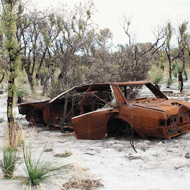 Decaying by Ruth Courts - Transportation Automobiles ( car, bushfire, australia, rust, abandoned,  )