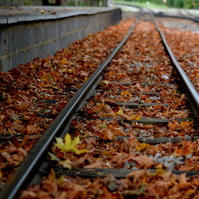Leaves on the Line by Neil Hannam - Transportation Railway Tracks ( train tracks, transport, leaves, trains,  )