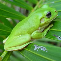 Screenshot of Frogs Jigsaw Puzzles