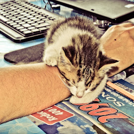 Cat sleeps on master's hand by Ovidiu Porohniuc - Animals - Cats Kittens ( office, cats, hand, kittens, sleep,  )