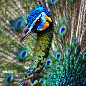 Burung by Yohanes M Wain - Animals Birds