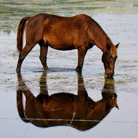 Reflect on Me by Diane Davies Raulerson - Animals Horses (  )