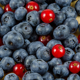 Red currants and blueberries by BART Photography - Food & Drink Fruits & Vegetables ( plant, juicy, blueberry, currant, illustration, sugary, berry, nature, fresh, care, ingredient, jam, objects, black, closeup, healthcare, dessert, isolated, fruit, decoration, fruits, delicious, tasty, red, sweet, color, food, ripe, healthy, summer, freshness, natural )