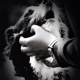 Loyalty  by Rob Booth - Animals - Dogs Portraits