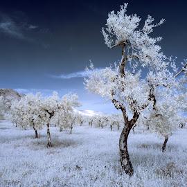 Silent Nature by Lorenzo Di Candia - Nature Up Close Trees & Bushes ( natura, ir, infrarossi, nature, infrared, di candia lorenzo,  )