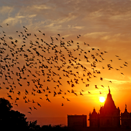 flocking behavior in flight by Rakesh Sharma - News & Events Science ( flocking behavior in flight )