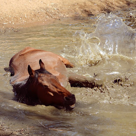 by Silke Jordaan - Novices Only Pets ( water, natural light, splash, horse, play, summer, brown,  )