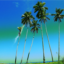 Coconut tree @ Budong-budong beach by Agustina Djafar - Novices Only Landscapes (  )