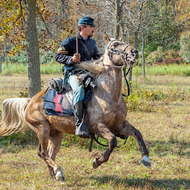 Charging Steed by Steve Banker Sr - Animals Horses ( civil war, union army, running horse, cavalry soldier, charging horse )