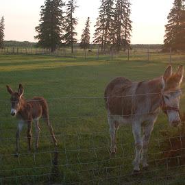 Donkeys by Becket Garner - Novices Only Wildlife