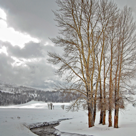 Yellowstone in Winter by Jonathan Abrams - Landscapes Weather ( water, clouds, national park, yellowstone, winter, nature, snow, creek, trees, landscape )