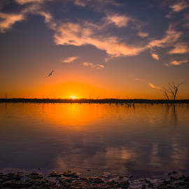 by Thomas Crews - Landscapes Sunsets & Sunrises ( lake ray roberts )