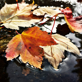 by Marta Raczkowska-Radkiewicz - Instagram & Mobile Android ( fall, color, colorful, nature,  )