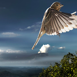 Finch on the Mountain by Tom Martin - Animals Birds ( finch, birds )