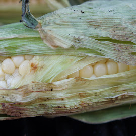 BBQ corn by Trish Fisher - Food & Drink Fruits & Vegetables (  )