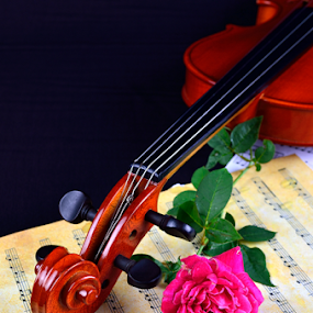 Violin sheet music and rose black composition still life music by Shahril Khmd - Artistic Objects Musical Instruments ( detail, concept, gift, old, paper, beauty, romance, curves, love, performance, performing, nostalgic, fiddle, notation, classic, black, flower, note, clef, music, musical, beautiful, art, romantic, shape, instrument, rose, red, classical, elegant, bow, antique )